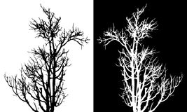 Dry tree isolated vector. On white Royalty Free Stock Images