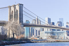 Dry tree and Janes�s carousel in front of Brooklyn Bridge at New Royalty Free Stock Photos