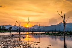 Dry tree with lake and mountain in sunset Stock Photography