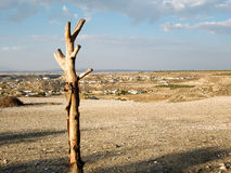Dry Tree and Landscape Stock Photos