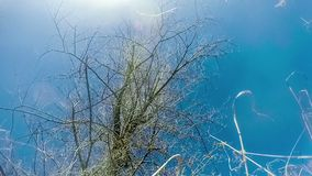 Dry tree without leaves against  blue sky  with. Clouds vdeo hd 1920x1080 gopro stock video