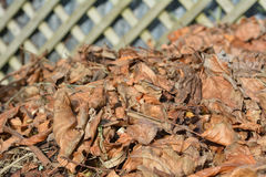 Dry tree leaves in a garden compost. In during the Autumn season Royalty Free Stock Photo