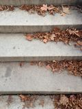 Dry Tree Leaves on Stone Steps in a Park in Winter. Stock Image