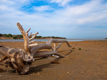 Dry tree lying on the sand. On the sky background Stock Photo