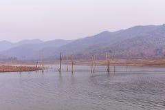 Dry tree in Maengad Dam, Chiangmai Thailand Royalty Free Stock Photo