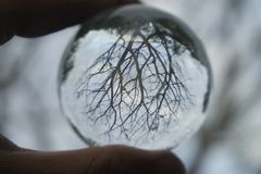 A dry tree with many branches and twigs in a crystal ball stock photo