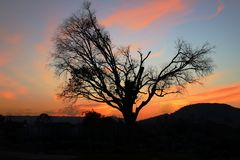 Dry tree in the middle of the sunset on a mountain stock photo