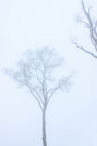 Dry tree in the mist Stock Photography