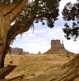 Dry tree in monument valley stock images