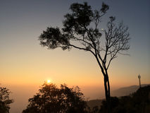 Dry tree on the mountain. In the morning Royalty Free Stock Image