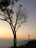Dry tree on the mountain. In the morning royalty free stock photos