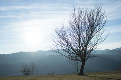 Dry tree on mountain Stock Photography