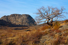 Dry tree in the mountains Royalty Free Stock Photo
