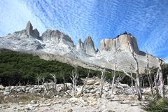 Dry tree in Torres del Paine National Park, Cuernos, Patagonia,. Dry tree in National park Torres del Paine, Frances valley ,Cuernos, Patagonia, trekking land, a royalty free stock image