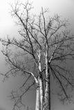 Dry tree Stock Photos