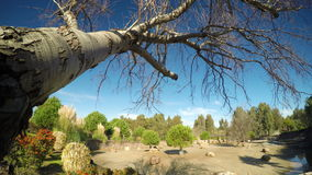 The Dry Tree and Nature 4K Ultra HD stock footage
