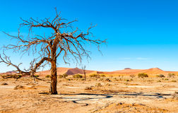Dry Tree Stock Photography
