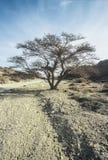 A Dry tree Royalty Free Stock Photos
