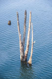 Dry tree and old wood in deep blue  lake. Or river, amazing and beauty of nature Stock Images