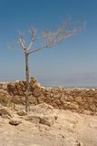 Dry Tree On The Ruins Of Ancient Fortress In D Royalty Free Stock Image