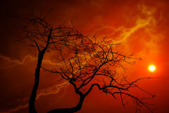 Dry tree with orange sky with lightning. Royalty Free Stock Photo