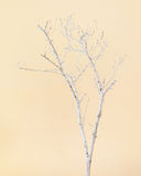 Dry Tree Painted with White Paint on Beige Background. Royalty Free Stock Photo