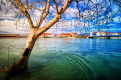Dry tree protruding from the swollen river during terrible flood Stock Photo