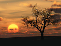 Dry tree and red sunset Royalty Free Stock Photo