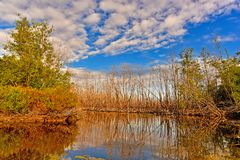 The dry tree reflects the water in the swamp under the blue sky. And the white cloud in the eveing stock photos