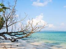 Dry tree at sea beach Stock Photography