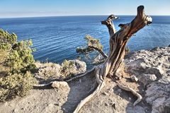 Dry tree on the seashore Stock Photos
