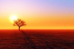 Dry tree silhouette Royalty Free Stock Photo