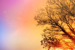 Dry tree silhouette over colorful sunset sky, beautiful nature background. With copy space royalty free stock image