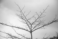 Dry tree with sky background   outdoor natural landscape   black and white photograph Stock Photos