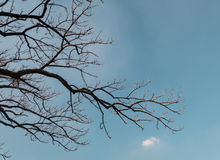 The dry tree and sky Stock Images