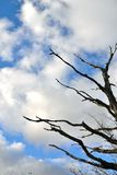dry tree and sky Royalty Free Stock Images