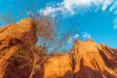Dry Tree in Small Canyon Stock Image