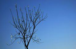 A dry tree with some leaves glowing in blue sky. In summer stock image