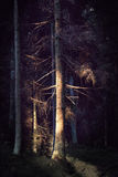Dry tree in spooky forest Stock Photos