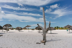 Dry tree standing on the of the Caribbean Sea on the white sand beach of Cayo Largo, Cuba Royalty Free Stock Image