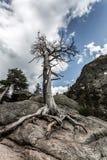 Dry tree on stone hill Stock Photo