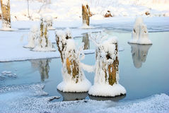 Dry tree stumps covered with snow on frozen pond Stock Photo
