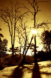 Dry tree at sunrise Stock Images