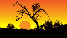 Dry tree in sunset Royalty Free Stock Image