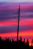 Dry tree at sunset Stock Image