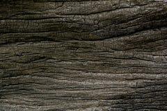 Dry tree texture Stock Photos