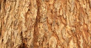 Dry tree texture macro shot stock video footage