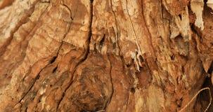 Dry tree texture macro shot stock footage