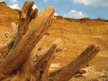Free Dry Tree Trunk Stock Photo - 5567120