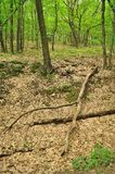 Dry tree trunk lying in green forest Royalty Free Stock Image